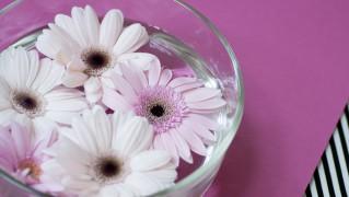 Flower0014