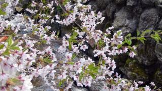 Flower0017
