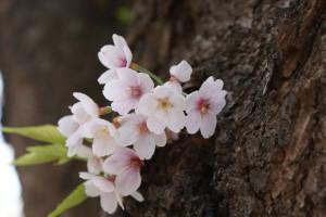 Flower0018