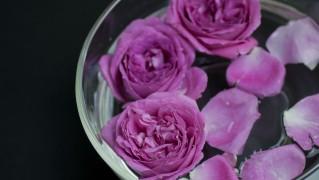 Flower0019