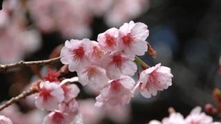 Flower0020