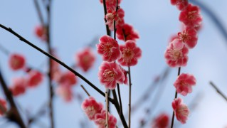 Flower0021