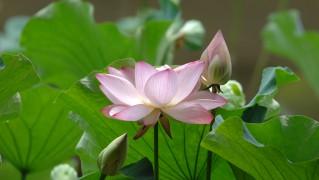Flower0023