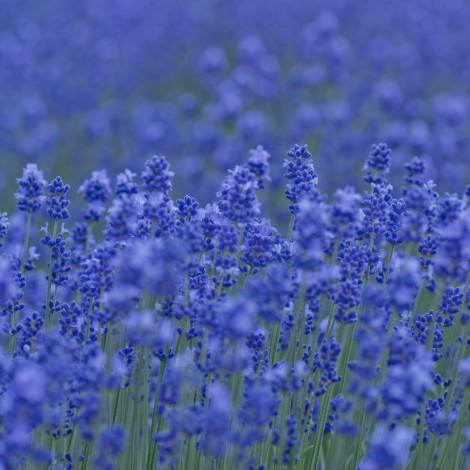Flower0025