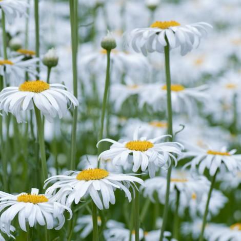 Flower0026