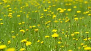 Flower0028