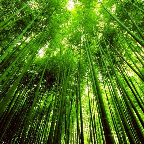 Kyoto0001