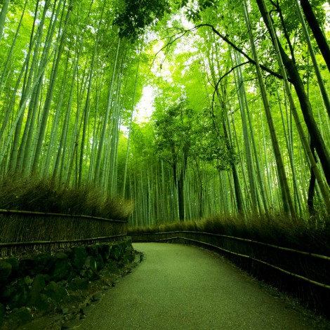 Kyoto0002