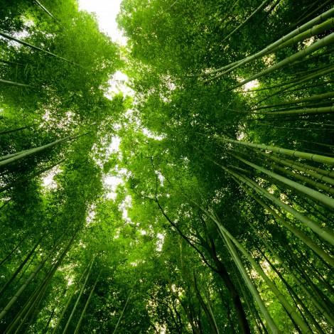 Kyoto0006