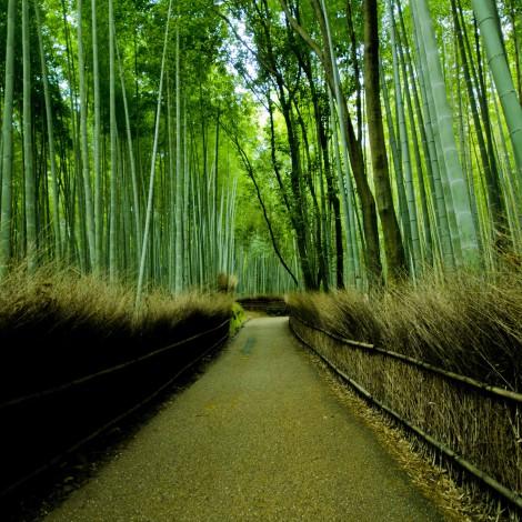Kyoto0008