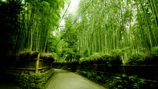 Kyoto0009